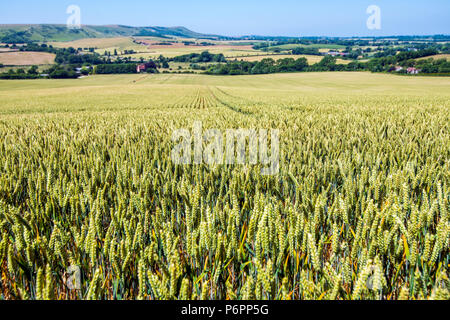 View towards Firle Beacon from Jevington in East Sussex, England, showing a beautiful farming landscape. - Stock Image