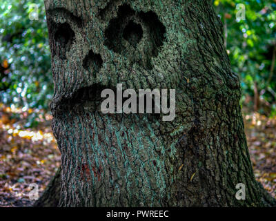 The Monster tree in the woods - Stock Image