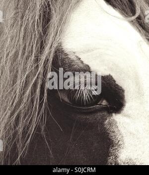 Horse Portrait - Stock Image