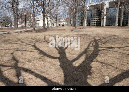 Silhouette of tree in winter,  Michigan, USA - Stock Image