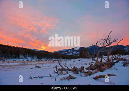 Rocky Mountain National Park, sunset, winter, Landscape, snow, fallen tree - Stock Image