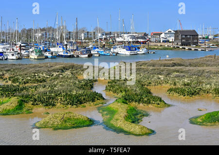 River landscape of boats & yachts in marina moorings at coastal village of Tollesbury on River Blackwater salt marshes & muddy creeks Essex England UK - Stock Image