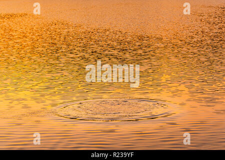 Splash In Lake At Sunset, Pennsylvania, USA - Stock Image