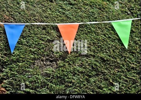 bunting colour privit bush - Stock Image
