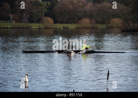 Two men rowing  a scull boat on the  Trentham  Gardens  Lake in Staffordshire England UK - Stock Image