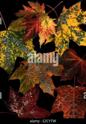 Fallen Autumnal leaves - Stock Image