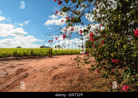 a dirt road under a blue sky with flowers in the foreground - Stock Image
