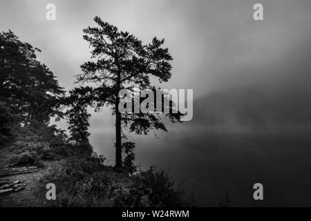 Tree withe early morning mist on mountain lake - Stock Image