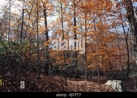Autumn scenic, Harriman State Park, Sloatsburg, NY, USA - Stock Image