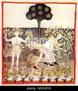 'Tacuinum Sanitatis', Summer - Stock Image