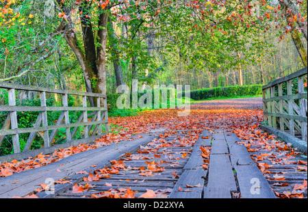 A beautiful autumn concept. - Stock Image