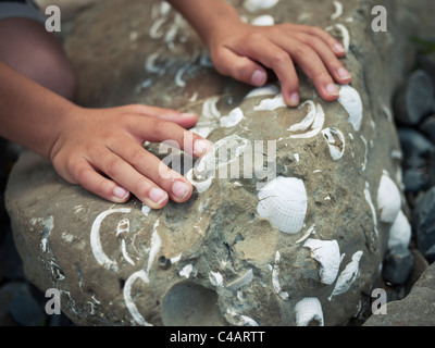 Boy's hands touching rock containing seashells. - Stock Image