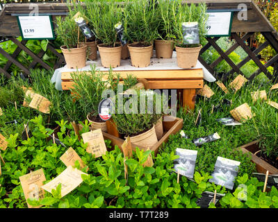 Display of Kitchen Garden Organic Herb bedding Plants for spring planting in a Garden Centre - Stock Image