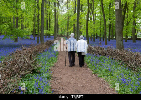 Two elderly people walking through Dockey Wood, Ashridge Estate UK - Stock Image