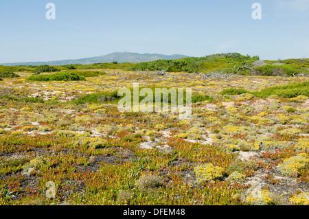 Landscape and flora of Portugal's Serra da Sintra natural park near Cabo Raso, not far from Lisbon. - Stock Image