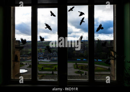 Art Work by Rachel Emily Taylor in response to the ill health of Josephine Bowes who died before the museum was complete depicts Rooks on a window - Stock Image