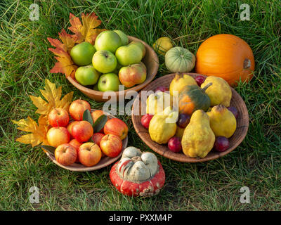 A selection of autumn fruits in bowls on a green grass background with leaf decorations - Stock Image