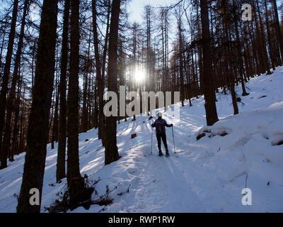 Snowshoeing through forest near Fontgillarde, Parc regional du Queyras, French Alps - Stock Image