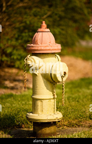 Faded yellow and red fire hydrant in the grass - Stock Image