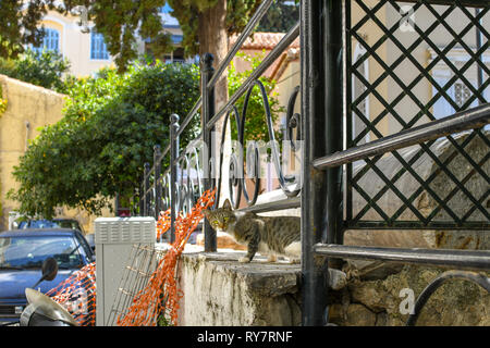 A stray, feral cat peeks out from a garden in the Plaka district of Athens, Greece. - Stock Image