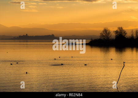 Beautiful view of Trasimeno lake at sunset with birds on water and Castiglione del Lago town in the background - Stock Image