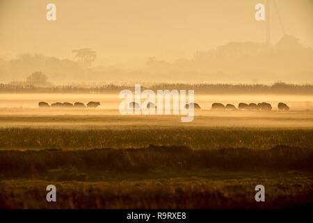 Pevensey Levels, UK. 28th Dec, 2018. UK Weather: Flocks of sheep graze as the mist rolls across the Pevensey Levels this evening after a cold day in East Sussex, . Pevensey Levels, East Sussex, UK. Credit: Ed Brown/Alamy Live News - Stock Image