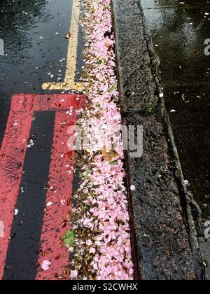 Blossom in street gutter - Stock Image