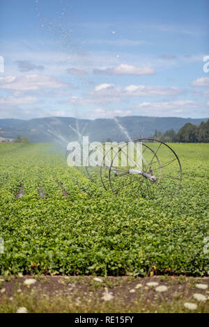 Irrigation system watering a farm field - Stock Image