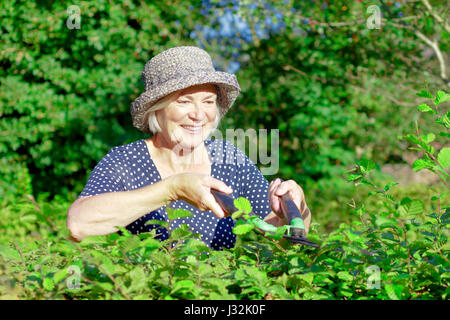 Smiling retired woman with a straw hat trimming the hedge of her garden yard on a sunny summers day, joy of gardening - Stock Image