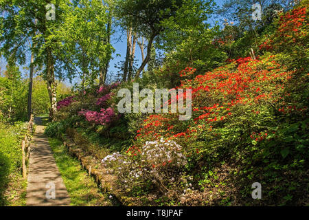 A park in the north eastern Friuli Venezia Giulia region of Italy in spring with lots of azaleas in flower - Stock Image