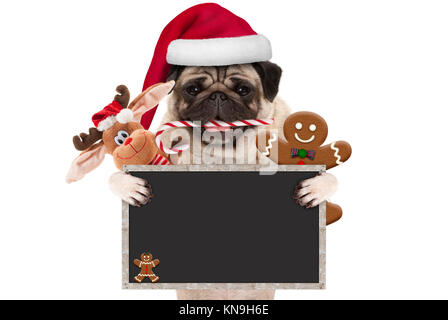 cute Christmas pug dog with santa hat and candy cane, toys and cookies, holding up blank  blackboard sign, isolated - Stock Image