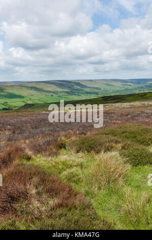 north yorkshire moors wilderness yorkshire landscape heather - Stock Image