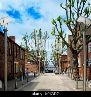 Greening the city. Trees in Old hall Street, Wolverhampton, UK - Stock Image