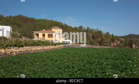 Typical tranquil countryside landscape with rustic houses, agricultural fields and animal farms in the highest village in Spain, in Tenerife - Stock Image