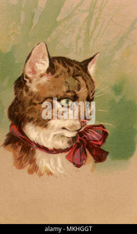 Brown and White Cat - Stock Image