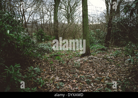 Woods near the Greek Temple at the Yorkshire Sculpture Park. - Stock Image