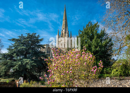 Norwich Cathedral in Norwich city centre, Norfolk, East Anglia, England, UK. - Stock Image