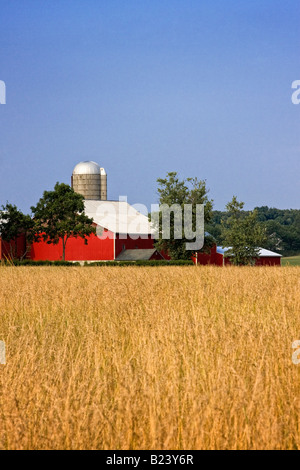 Red barn in golden yellow wheat field - Stock Image