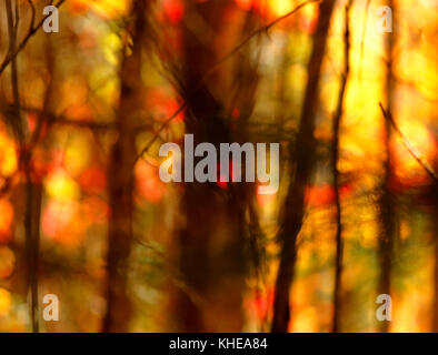 Soft-focus, motion-blur abstract on back-lit autumn leaves and trees. - Stock Image