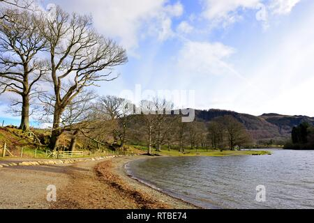Trees on the shoreline of Derwent Water,Lake District,Cumbria,England,UK - Stock Image