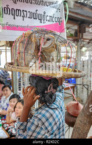 Luck bird vendor selling barn owls (Tyto alba). Sa-gele khaley (the luck birds) is a Buddhist practice for luck. Mandalay Myanmar (Burma) - Stock Image
