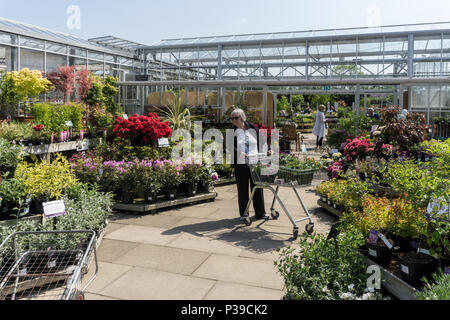 Senior woman with a trolley full of plants and shrubs at the Garden Centre, Beckworth Emporium, Mears Ashby, Northamptonshire, UK - Stock Image