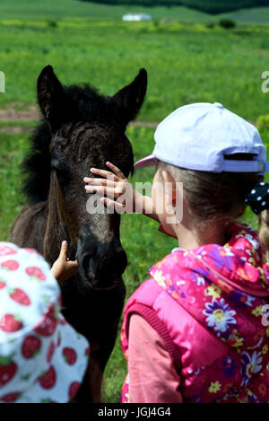 Young girl in summer stroked the head of a young foal horse in natural sunlight - Stock Image
