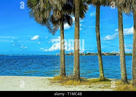 The nature of Sarasota, Florida - Stock Image