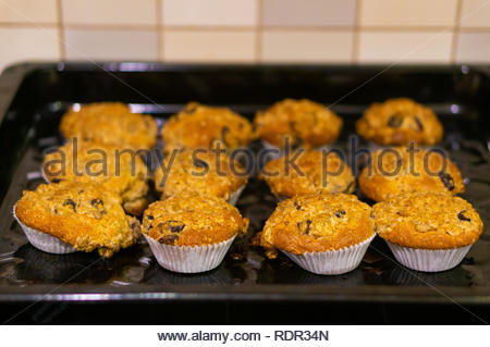 Full grain cupcakes with dry cranberries on a metal baking plate in soft focus. - Stock Image