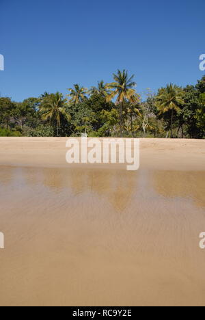 Tropical beach. View from sea to beach with coconut palms at low tide, Radical Bay, Magnetic Island, Queensland, Australia - Stock Image