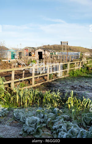 Allotment garden in winter with Penshaw monument in the background, Sunderland, England, UK - Stock Image