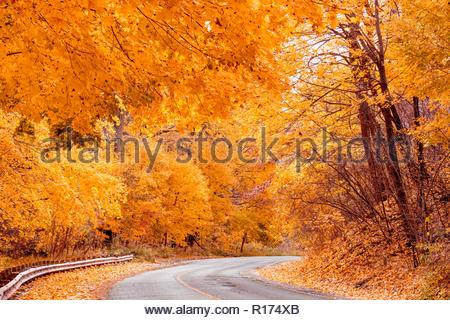 Peak autumn colour road through the eastern deciduous Carolinian forest fall color in Toronto Ontario Canada - Stock Image
