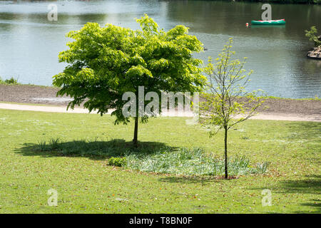 Small park trees summer day - Stock Image