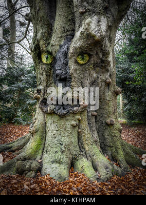 Face in the tree - Stock Image